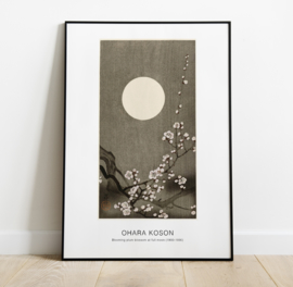 Blooming plum blossom at full moon