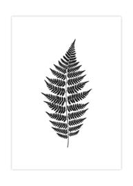 Botanische poster varenblad