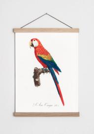 Poster met Geelvleugel ara