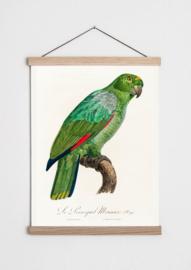 Poster met groene papegaai