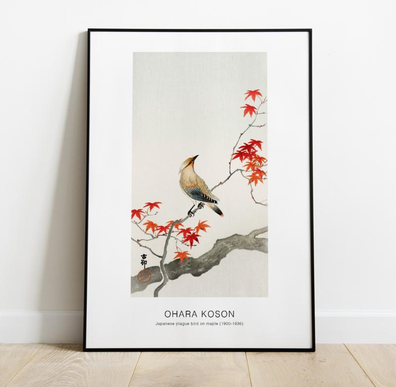 Japanese plague bird on maple