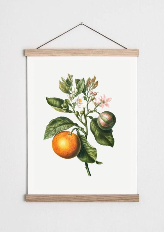 Vintage poster Sinaasappel