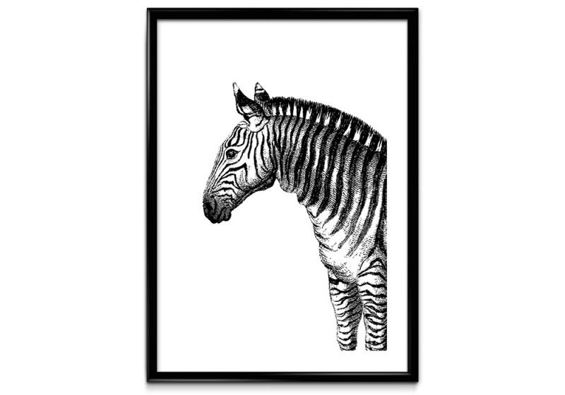 Zebra zwart wit poster