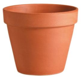Terracotta Potten met Plant