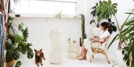 Wonder Plants - Planten in je interieur