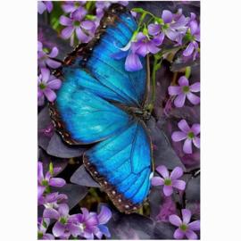 painting blauwe vlinder