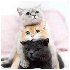 painting 3 katten