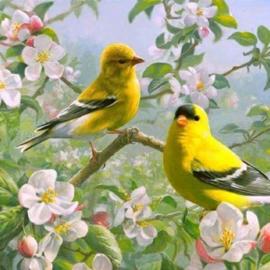 painting vogeltjes