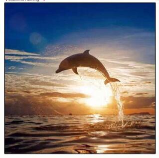 painting dolfijn