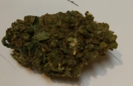 BLUE CHEESE 22% CBD Wiet 1 gram