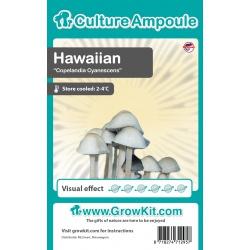 Hawaiian Magic Mushrooms-sporen 10ml