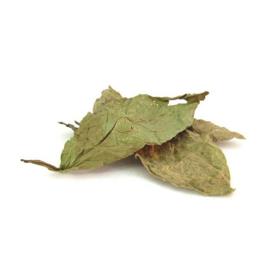 Psychotria Viridis - Chacruna - Bladeren - 50 gram