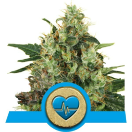 Medical Mass medicinal semillas de marihuana