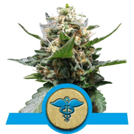 Royal Medic semillas femeninas medicinales