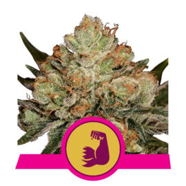 Hulk Berry Vrouwelijke Wiet Zaden