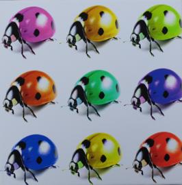 Canvas lieveheerstbeestje