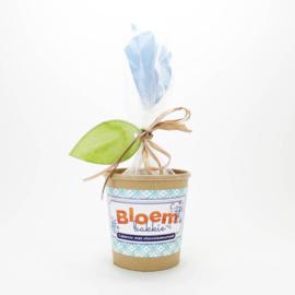 Concept Unie Bloempot met Cakemix Chocolade