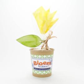 Concept Unie Bloempot met Cakemix Limoncello