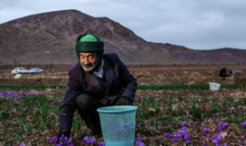 Saffraan, hoge kwaliteit uit Iran