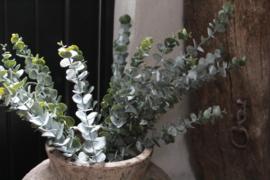 Eucalyptus kunst