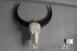 Diverse buffelschedels