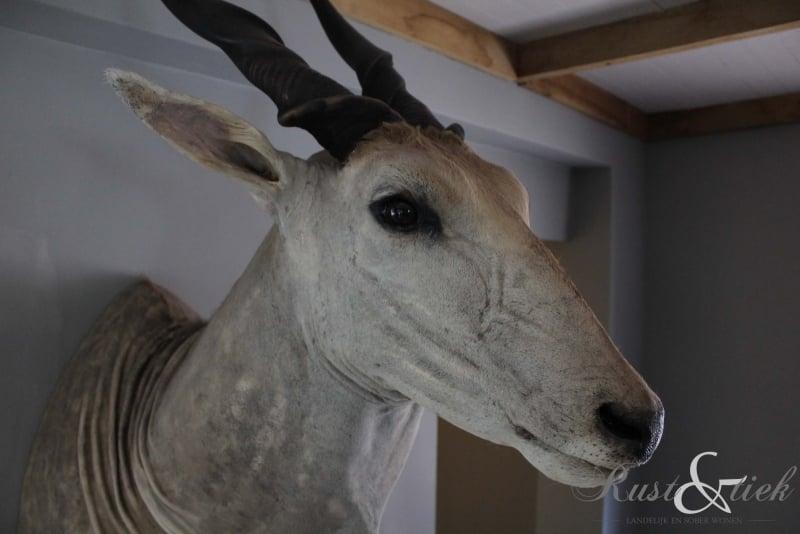 Opgezette eland antilope