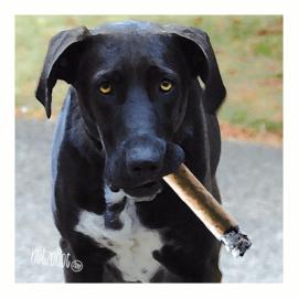 Cadeau hond | Lekker paffen