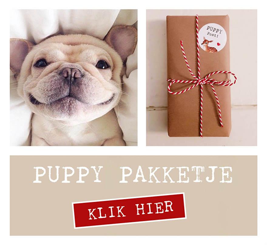 Puppy cadeau | Notzohot