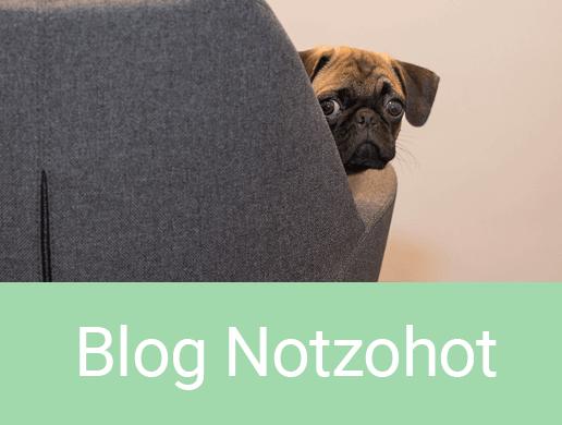Blog honden cadeaus webshop Eindhoven