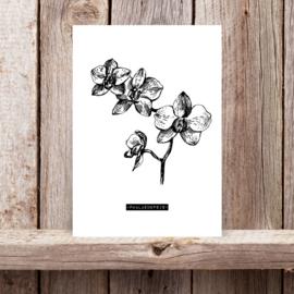 """Woonkaart A5, """"Phalaenopsis"""""""