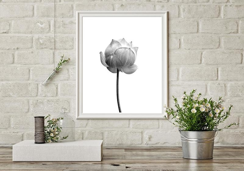 Woonkaart/poster A5, wit lotus