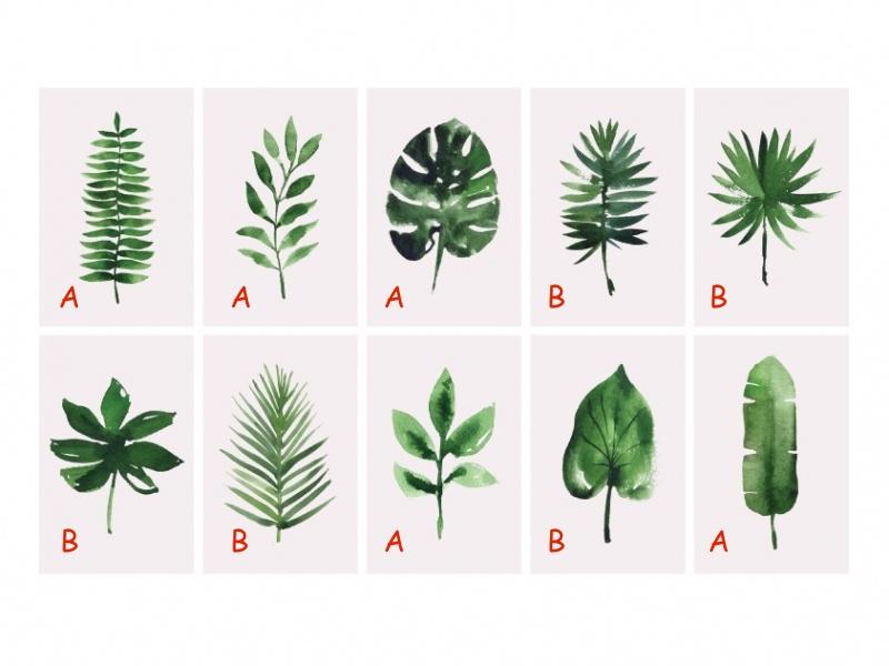5 tropical kaarten A