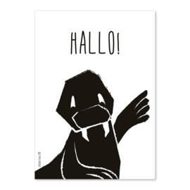 A6 Walrus Hallo!