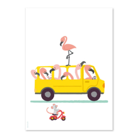 A6 Flamingo Bus
