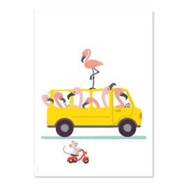 A6 Flamingo Bus