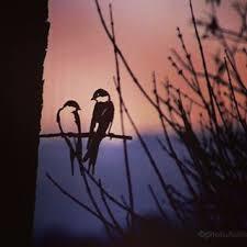 Zwaluwen - Metal birds