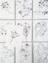 Tien bloemige kaarten - Maartje van den Noort