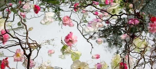Bloemenfoto - Dorien Latenstein
