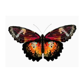 vlinder print (20x28cm)