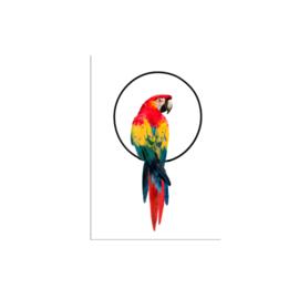 postkaart  papegaai