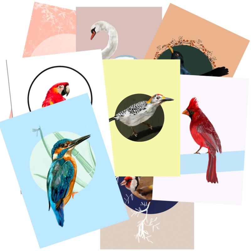 postkaartenset vogels