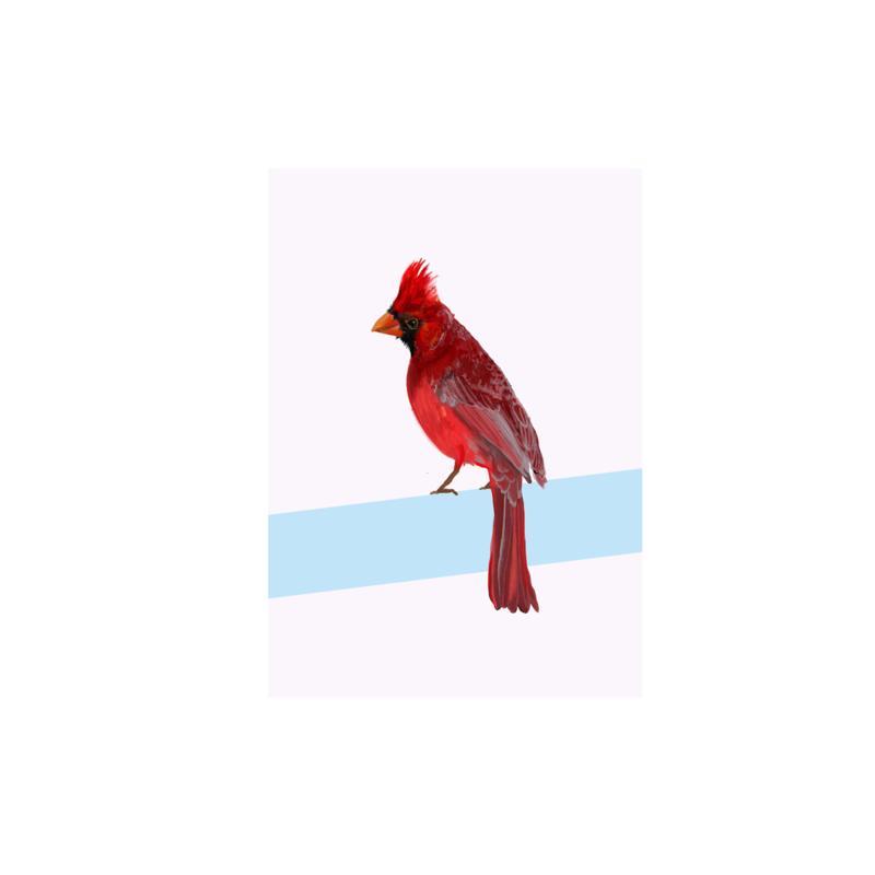 postkaart rode kardinaal