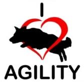 I love agility sticker (border collie)