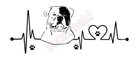Hartslag Amerikaanse bulldog
