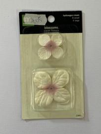 Hydrangea Cream - Making Memories