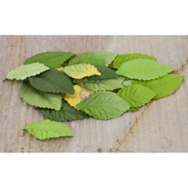 Green Leaves Prima