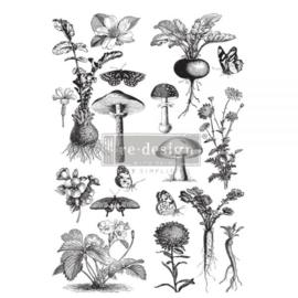 Fungi Forrest