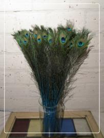 Pauwenveer oog blauw, blauwe pen