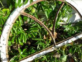 Brocante stalraampje mooi patina (65 x 36 cm)  (ST016)