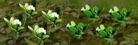 JTT 95529 Broccoli en bloemnkool